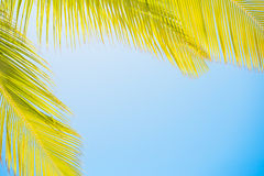 Palm leaves on clear blue sky Royalty Free Stock Photography