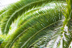 Palm leaves. Stock Image