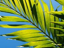 Palm leaves close-up with hi-light shades and shadows. Palm leaves detail close-up with hi-light shades and shadows shallow depth of field, soft focus under stock image