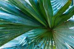 Palm leaves Royalty Free Stock Photos