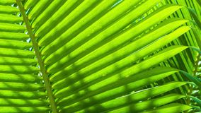 Palm leaves close-up. Tropical abstract background. Video 1920x1080 - palm leaves close-up. Tropical abstract background stock video