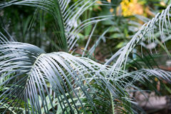 Palm leaves closeup Stock Images