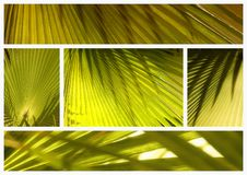 Palm leaves collage Stock Photo