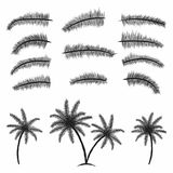 Palm leaves collection. Tropical palm trees with leaves. Black silhouettes isolated palm trees on white background Royalty Free Stock Image