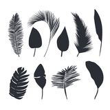Palm leaves dark silhouettes isolated on white background. Tropical leaves silhouette collection for your design vector illustration