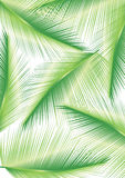 Palm leaves design Stock Image