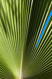 Palm leaves detail Royalty Free Stock Images