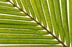 Palm Leaves Diagonal Royalty Free Stock Photos