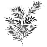 Palm leaves. Doodle style Royalty Free Stock Image