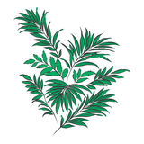 Palm leaves. Doodle style Royalty Free Stock Images