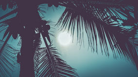 Palm leaves in dramatic tropical moon light Stock Photos