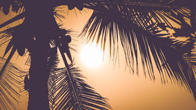 Palm leaves in dramatic tropical sunset, warm colour Stock Image