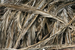 Palm leaves Stock Images