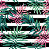 Palm leaves and fern on a black stripes. Royalty Free Stock Image