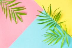 Palm leaves flat lay Summer holidays background Royalty Free Stock Photography