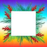 Palm leaves on frame Royalty Free Stock Photography