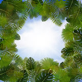 Palm leaves frame Royalty Free Stock Photos