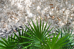 Palm leaves in front of wall made of small stones Stock Photos