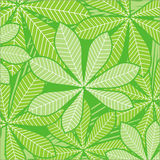 Palm leaves on green Stock Image