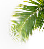 Palm leaves Stock Photo