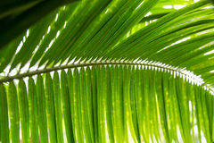 Palm leaves green background pattern Stock Photography