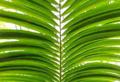 Palm leaves green background pattern Stock Photos
