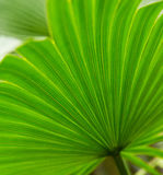 Palm leaves green background pattern Royalty Free Stock Photos