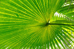 Palm leaves green background pattern Stock Images