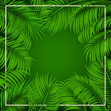 Palm leaves on green background Stock Photo