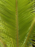 Palm leaves. Green color, brown stem Stock Photo