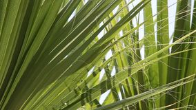 Palm leaves stock footage