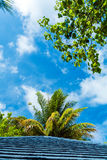 Palm leaves hanging over a wooden roof, Maldives Royalty Free Stock Image