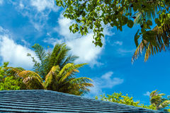 Palm leaves hanging over a wooden roof, Maldives Royalty Free Stock Photography