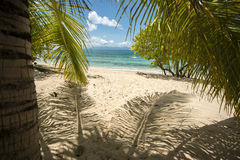 Palm leaves. Have beautiful texture. Paradise beach Stock Photos