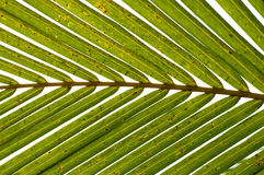 Palm Leaves Horizontal Stock Photo