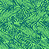 Palm leaves illustration. Tropical jungle plant. Royalty Free Stock Image