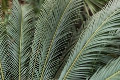 Palm leaves in the jungle stock photo