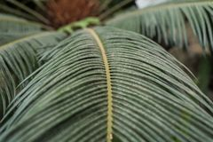Palm leaves in the jungle royalty free stock photo