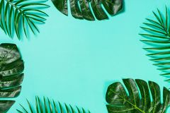 Palm leaves and monstera on blue top view. royalty free stock image