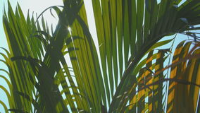 Palm leaves move in the wind, lens flare stock video footage