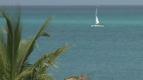 Palm leaves and ocean on turks and caicos island. Video of palm leaves and ocean on turks and caicos island stock footage