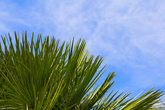 Palm leaves over blue sky Royalty Free Stock Photography