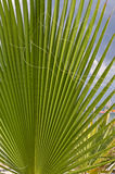 Palm leaves over blue sky Royalty Free Stock Image