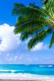 Palm leaves over ocean in Hawaii Stock Photo