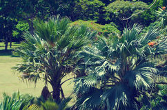 Palm leaves over ocean in Hawaii (vintage style) Stock Image