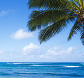 Palm leaves over ocean. Palm leaves over Pacific ocean in sunny day on  Poipu beach in Hawaii, Kauai, USA Royalty Free Stock Image