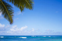 Palm leaves over ocean. Palm leaves over Pacific ocean in sunny day on  Poipu beach in Hawaii, Kauai, USA Stock Photo