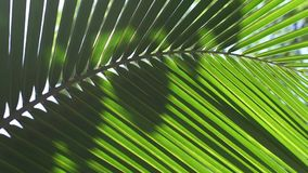 Palm leaf with sun glare stock video footage