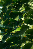 Palm leaves pattern stock images