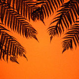 Palm leaves pattern Royalty Free Stock Images